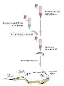 <i>in vivo</i> nucleic acid delivery reagent,<i> in vivo</i>-jetPEI®-Gal