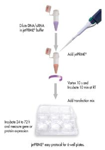 jetPRIME®, DNA and siRNA transfection reagent