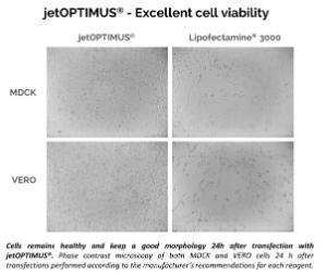 jetOPTIMUS® Cell viability with legend