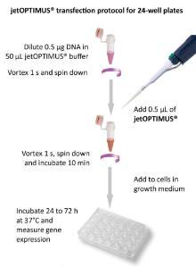 jetOPTIMUS® DNA transfection reagent, protocol